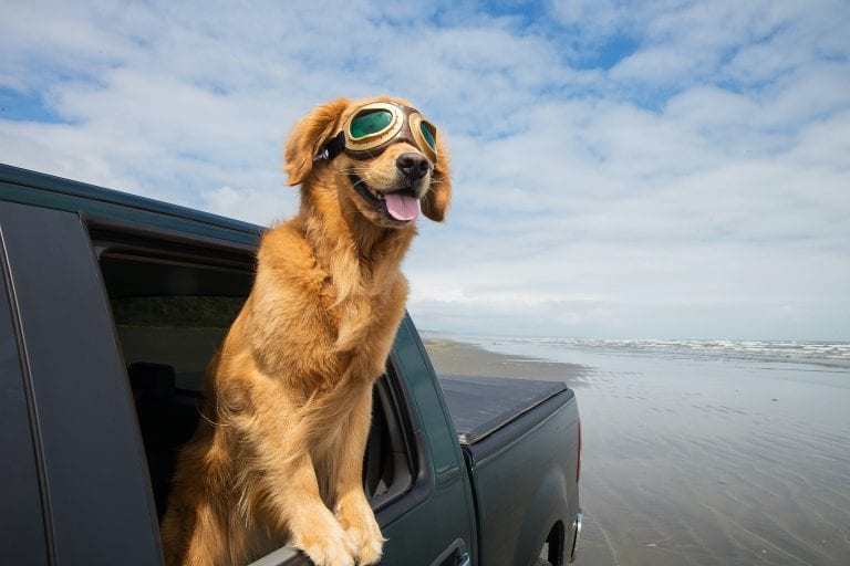 Dog with googles in car